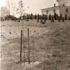 01_-_Strom_republiky_v_aleji_pred_kostolom_1968