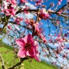 Jarny-rozkvet