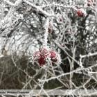 Tuhe-zimne-rano