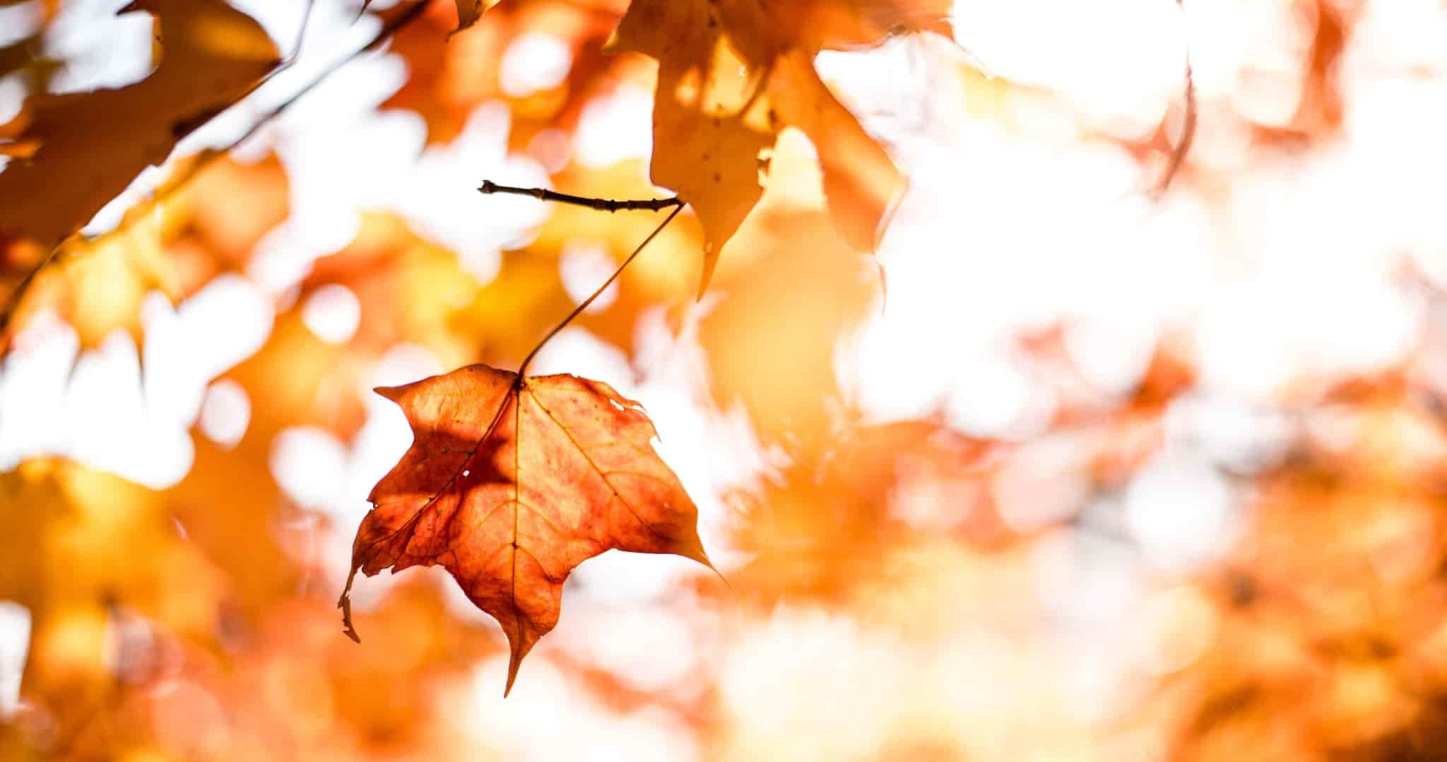 dnes je prvý jesenny den-2