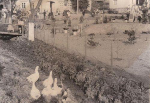 25-R-Park Fándlyho-asi 1969